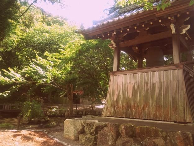 Photos: ショーネンジダイ