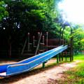 Photos: 夏の公園