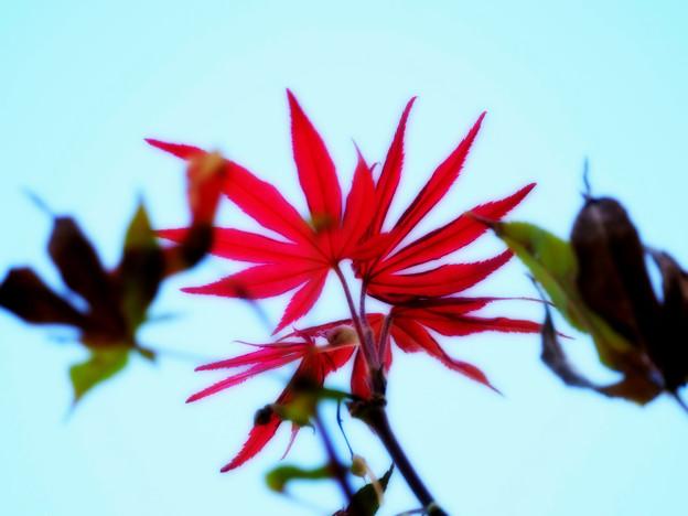 Photos: 秋はそこまで