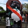 Photos: たぬきでんわ
