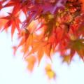 Photos: 高揚