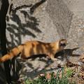 Photos: 動物認識AF