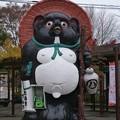 Photos: 緑の狸