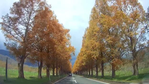 Photos: Autumn Highway