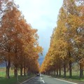 Photos: Autumn Highway