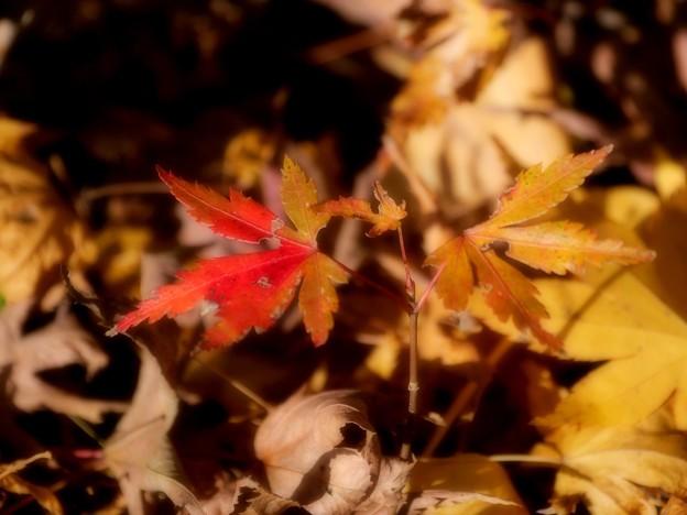 小さい秋の終わり