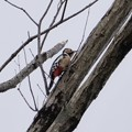 Photos: 探鳥!ナイトスクープ