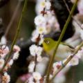 Photos: 百鳥の声
