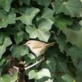 Photos: 歌詠鳥