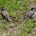 Photos: 後ろ向く鳥