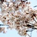 春は途絶えない