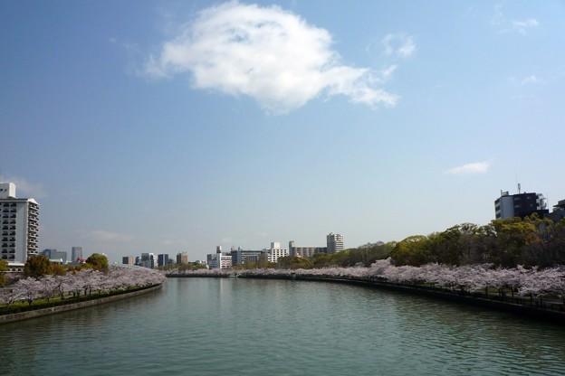 Photos: 大川桜