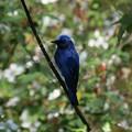 ワタシの青い鳥