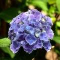 Photos: 藍より青く