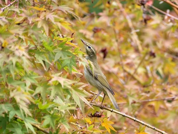 秋を見る眼