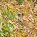 Photos: 秋を見る眼