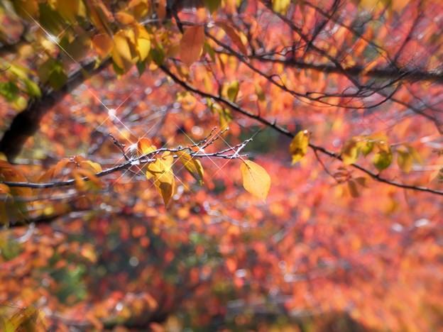 ナニワの秋