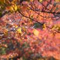 Photos: ナニワの秋