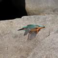Photos: 青い鳥に祈る