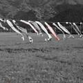 写真: DSC02370 松崎花畑