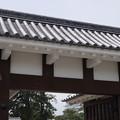 写真: DSC02425小田原城址公園