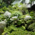 写真: DSC02488報徳二宮神社