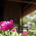 写真: DSC02683たてもの園