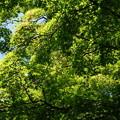 写真: DSC02803たてもの園