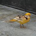 DSC03152掛川花鳥園