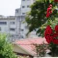 写真: 伊香保温泉7