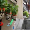 写真: 伊香保石段街の鬼灯と風鈴27