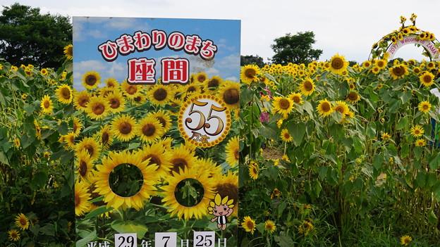 Photos: ひまわりまつり3