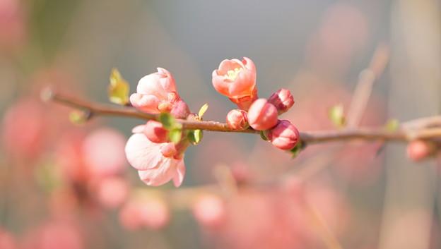 DSC07451花菜ガーデン