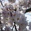 Photos: DSC07607八景島春散歩