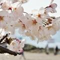Photos: DSC07610-01八景島春散歩