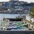 Photos: DSC07686八景島春散歩