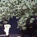 DSC07725みなとみらい夜景散歩春