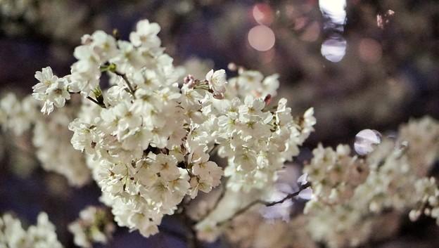 DSC07728-01みなとみらい夜景散歩春