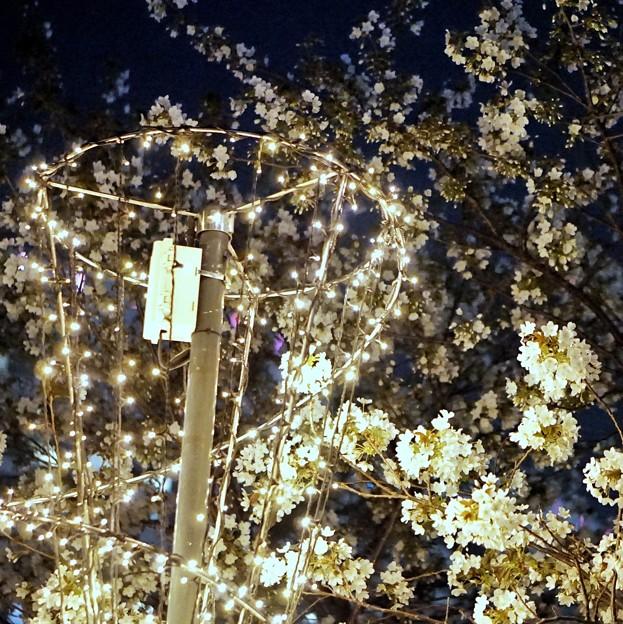 Photos: DSC07737-01みなとみらい夜景散歩春