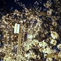 DSC07737-01みなとみらい夜景散歩春