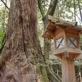 写真: DSC08088-01豊橋・鳥羽・お伊勢参りの旅