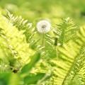 DSC08335-02花菜ガーデン