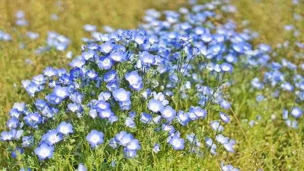 DSC08360-01花菜ガーデン