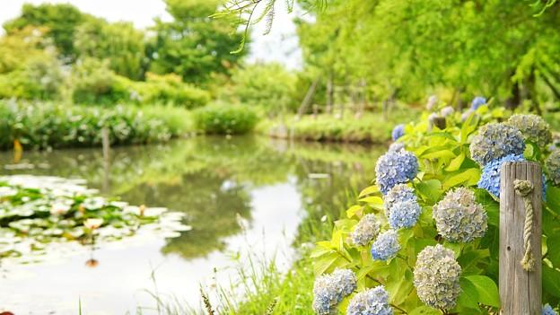 DSC09367-01花菜ガーデン