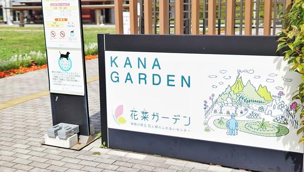 DSC09402-01花菜ガーデン