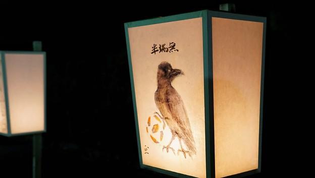 鎌倉ぼんぼり祭10