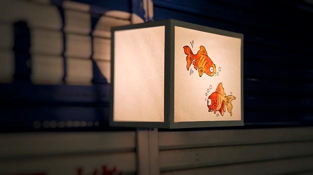 鎌倉ぼんぼり祭13