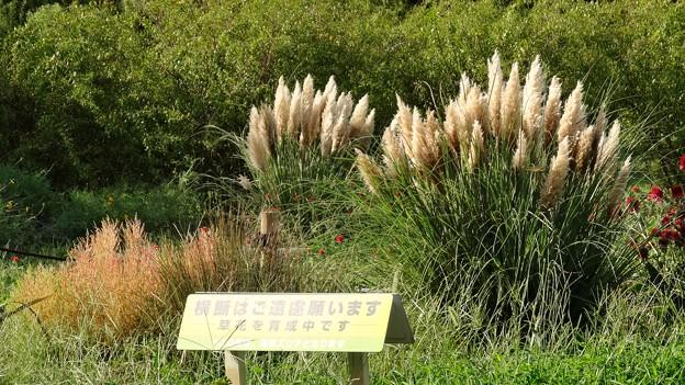 DSC03165-01花菜ガーデン