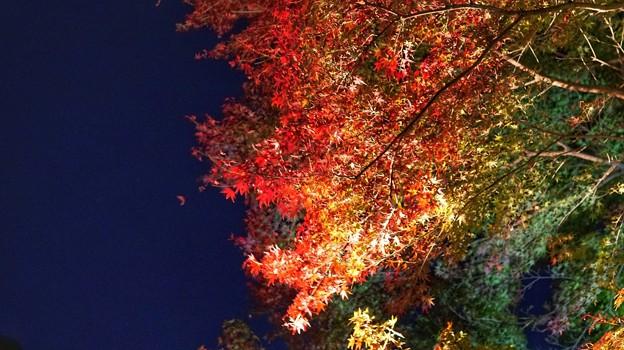 熱海梅園紅葉まつり2