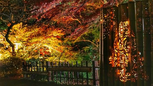 熱海梅園紅葉まつり5